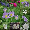 16 初夏の花たち<2>