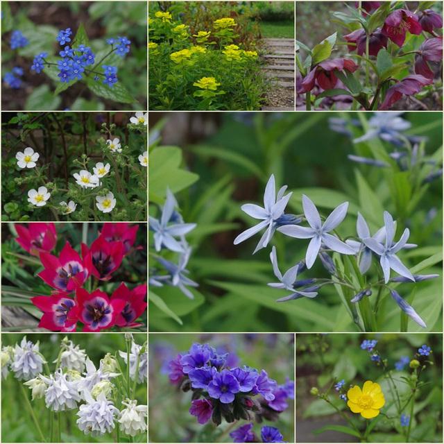 07 初夏の花たち<1>